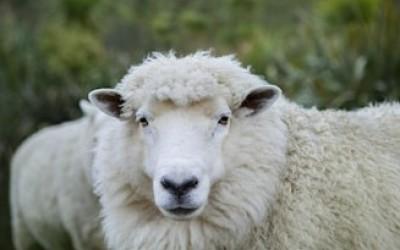 Merino and wool garments
